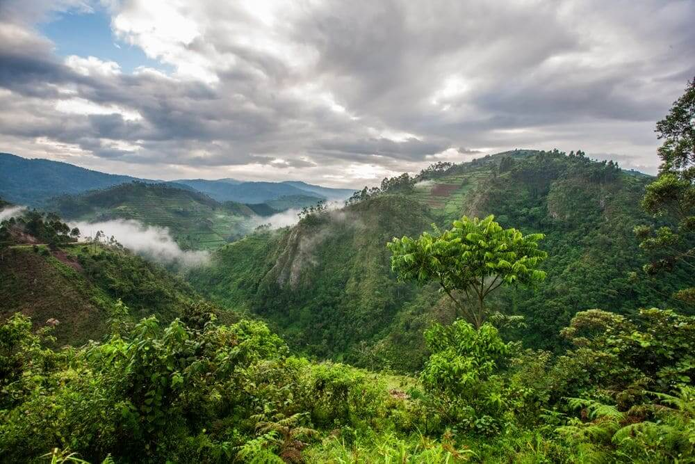view over the dense green forests and mountains of bwindi impenetrable national park, uganda