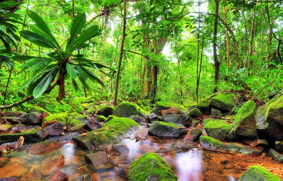 lush green rainforest of Masoala in Madagascar