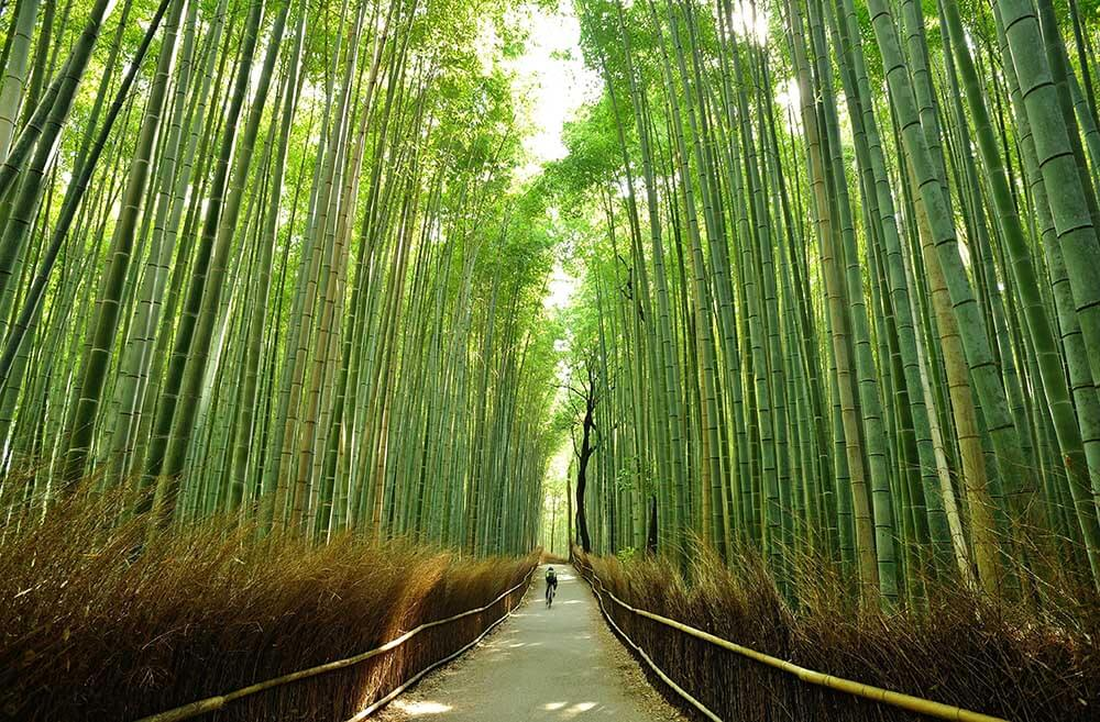 Cycling through bamboo trees in Japan
